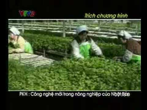 Công nghệ trồng rau sạch
