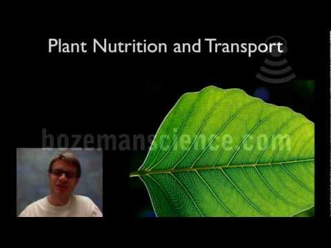 Plant Nutrition and Transport