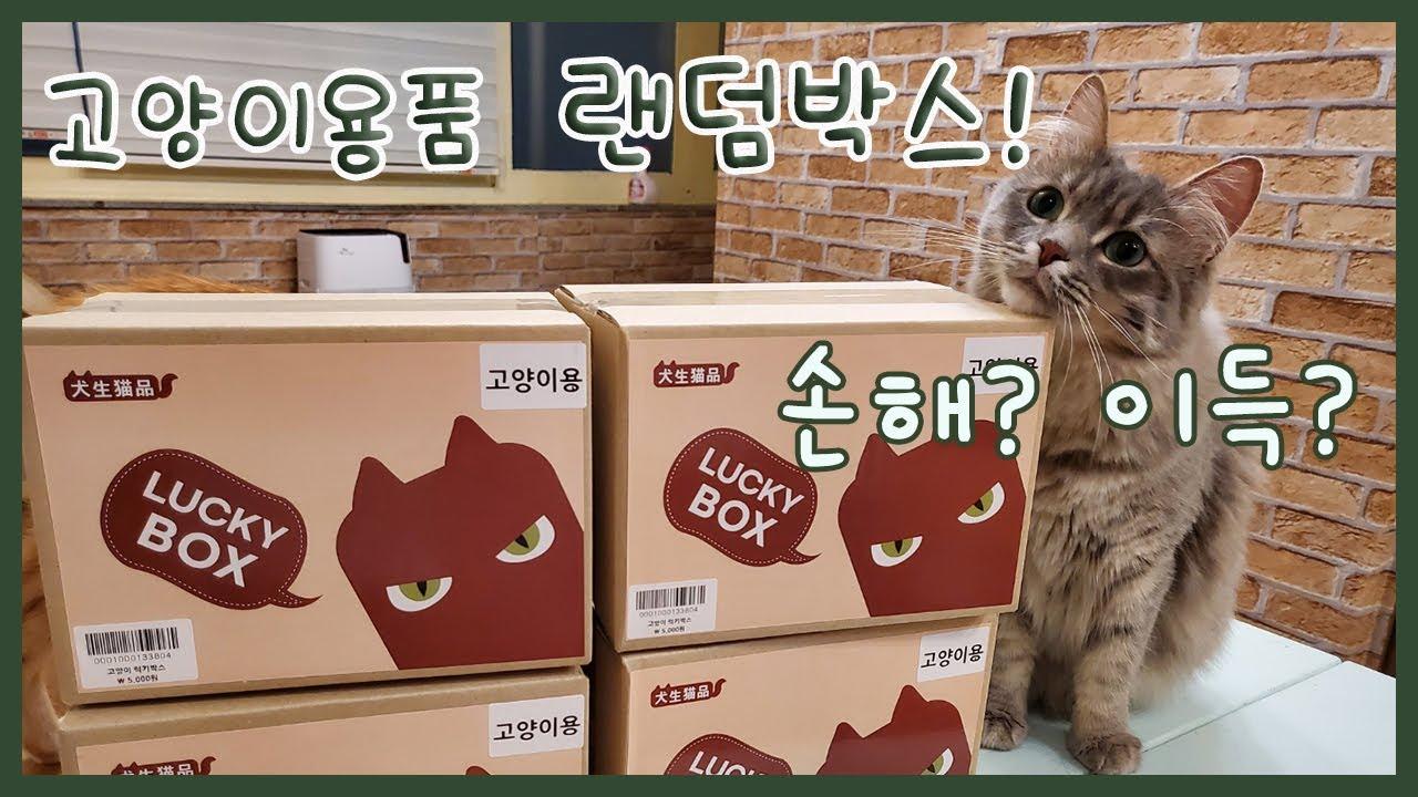 고양이용품 럭키박스 개봉기!