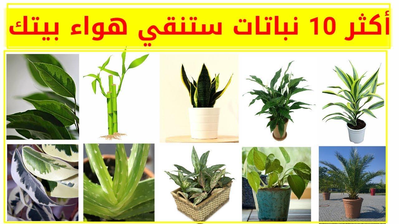 افضل 10 نباتات تنقي الهواء في البيت Youtube
