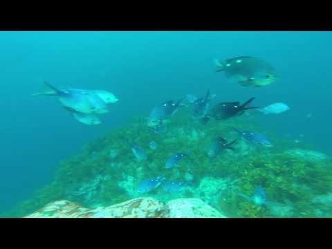 Tairua Spearfishing - March 2017