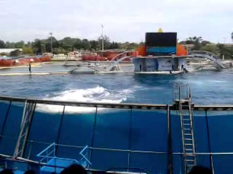 Spectacle des orques a marineland 2013 - YouTube