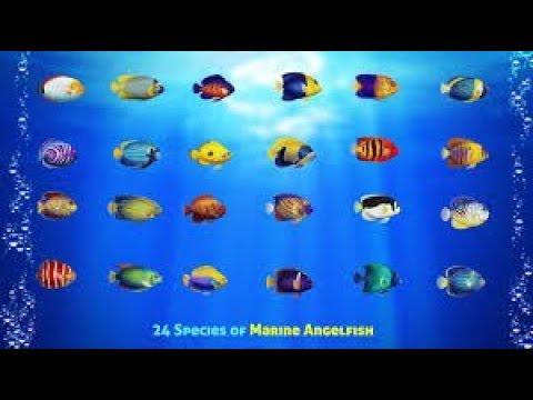 Best Large Angelfish For Saltwater Aquariums