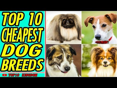 top-10-cheapest-dog-breeds