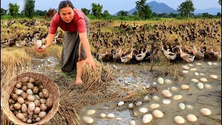 survival in the rainforest - find lots of egg duck & cook for dog with woman - Eating delicious HD