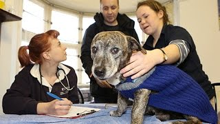 Nottingham Veterinary Students Help The Homeless And Their Pets