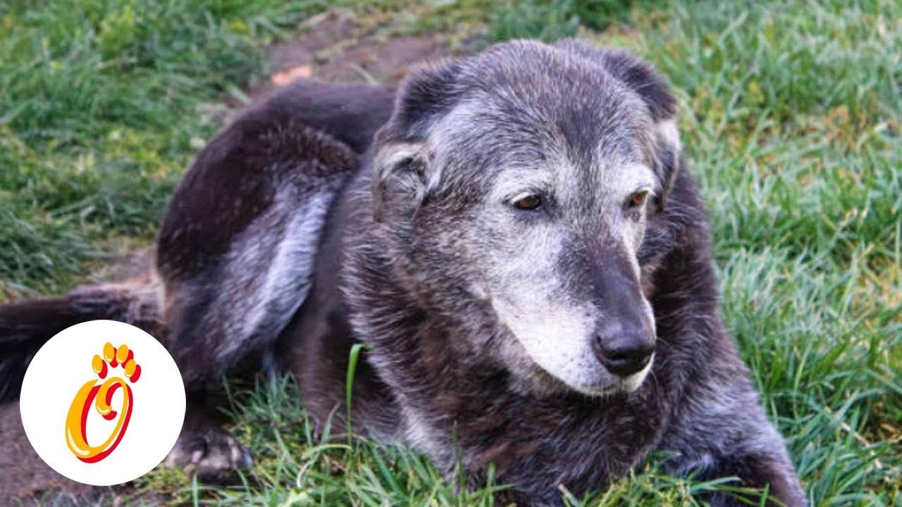 enfermedad de próstata en perro de