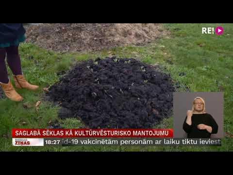 LTV ziņas par sēklu maiņu Dundagā un Kolkā