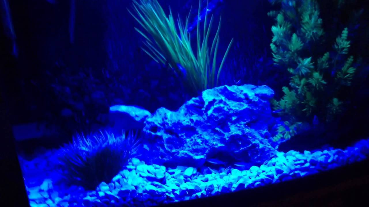 Love fish panorama tank 64 litre led lighting blue night for Night fishing light setup