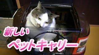 気になってた猫のペットキャリー買っちゃった