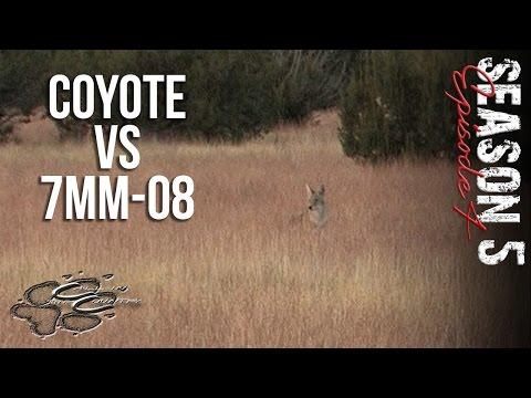 S5 E4 Coyote Vs 7MM-08