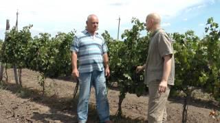 Пино. Молдова 2012.(, 2012-08-19T12:28:00.000Z)