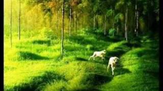 Urdu Poetry - Naghma O Sher - Phir sawan