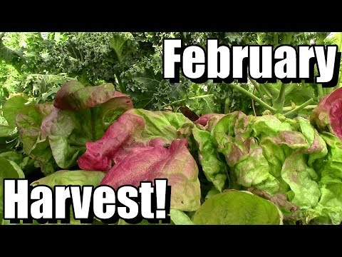February Vegetable Garden Harvest (Zone 5): Local Food at Its Best!