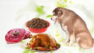 Mật ăn gì mà béo đẹp thế? Kİnh nghiệm nuôi chó Alaska đẹp
