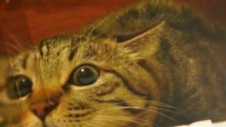 Смешные фотки котов!😄