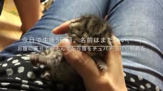 母の指以外興味なし(*´-`)チュパチュパしながら眠りに落ちるネコ様.