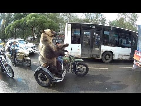 Bear Rides Motorcycle