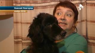 В Нижнем Новгороде прошел суд над владельцем центра передержки животных