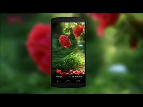 Red Rose Flower Live Wallpaper Apps On Google Play