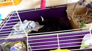 My Rat Cage Tour