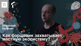 Инвазии растений — Анатолий Хапугин / ПостНаука
