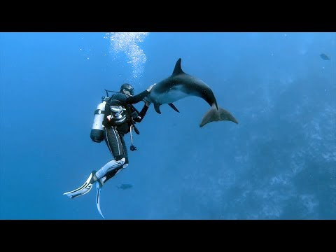 diving Tuamotu (Fakarava & Rangiroa) - French Polynesia