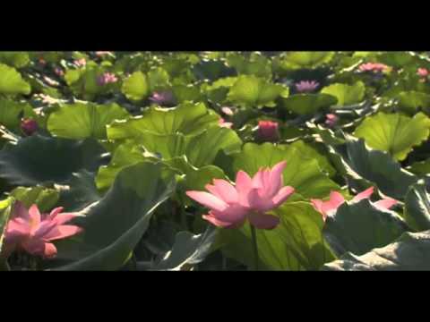 Beautiful Chinese Music, Liuyang River by Liu Ziling