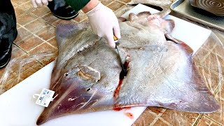 11kg giant skate fish cutting show, 40 years of master's amazing skill / Korean street food