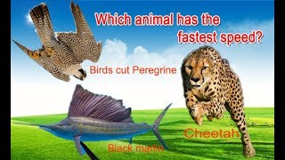 Super Fast Animals |  Fastest Animal In The World
