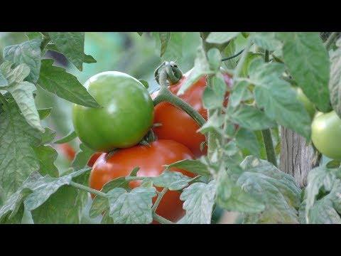 La permaculture, qu'est-ce que c'est ?