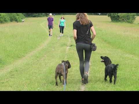 Rafa - Staffordshire Bull Terrier - 3 Weeks Residential Dog Training