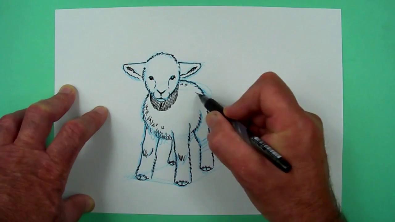 schaf zeichnen einfach kinder