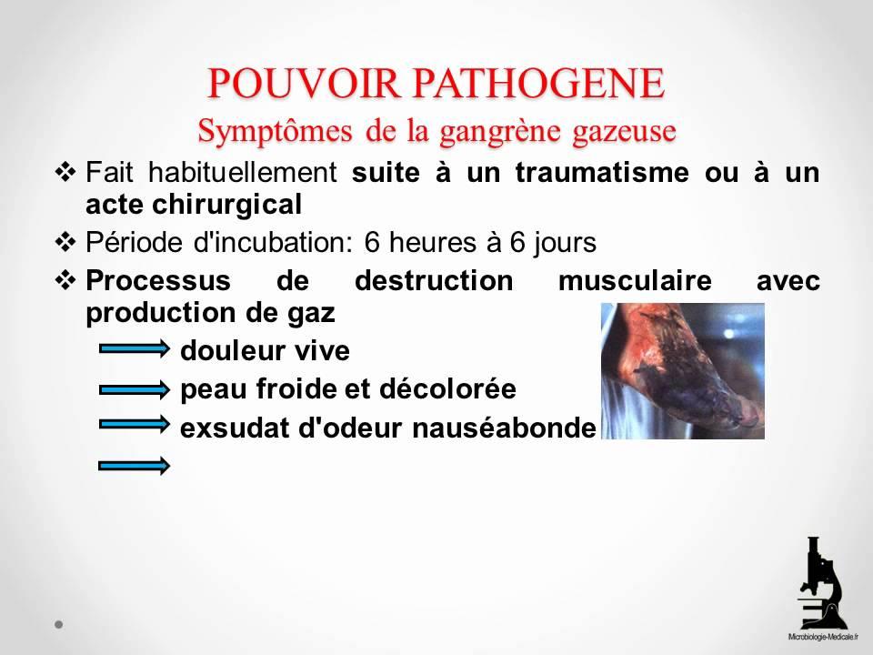 Clostridium Perfringens Youtube