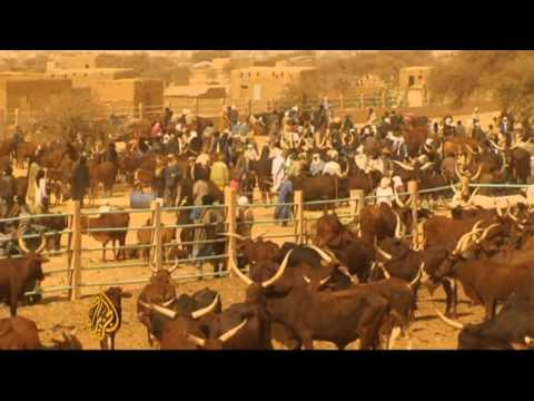 Drought-weakened animals dying in Niger
