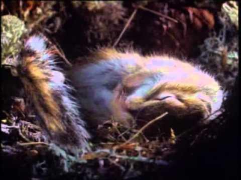 Серия фильмов о природе - Тайга