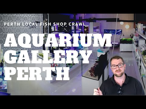 Perth LFS Crawl - Aquarium Gallery Perth