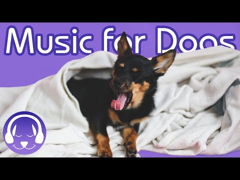 How to Chill My Dog! 15 Hours of Soothing Classical Music for Dogs!