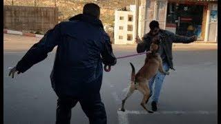 الكلب ماقوه الشرس للحراسة الشخصيه مع جمال العمواسي