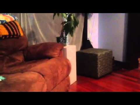 Pitbull welcoming party