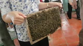 Gin Ng in an Eco Bee Farm at Vietnam Mekong River Delta 19-10-2016