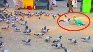 Video unik.. Bayi kecil vs Burung Merpati di kota mekah.. Senang melihatnya...