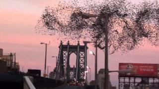 Стая птиц рисует в небе Нью-Йорка портрет Путина