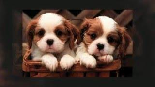 Emergency Vet Austin | Premium Emergency Pet Care