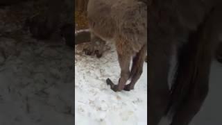 """Жестокие условия жизни животных в зоопарке """"Берендеево"""" на Ставрополье"""