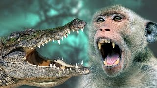 Monkey vs Crocodile - A Monkey Tried to save their child from Crocodile