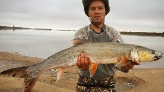 Желтощек или амурская нельма, самый желанный трофей у амурских рыболовов..