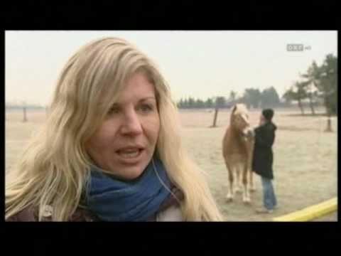 BurnOut  Psychotherapie mit Hilfe von Pferden ORF TV Bericht