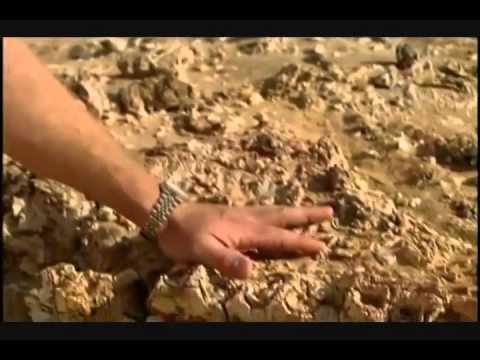 Whale Fossil in Egyptian Desert