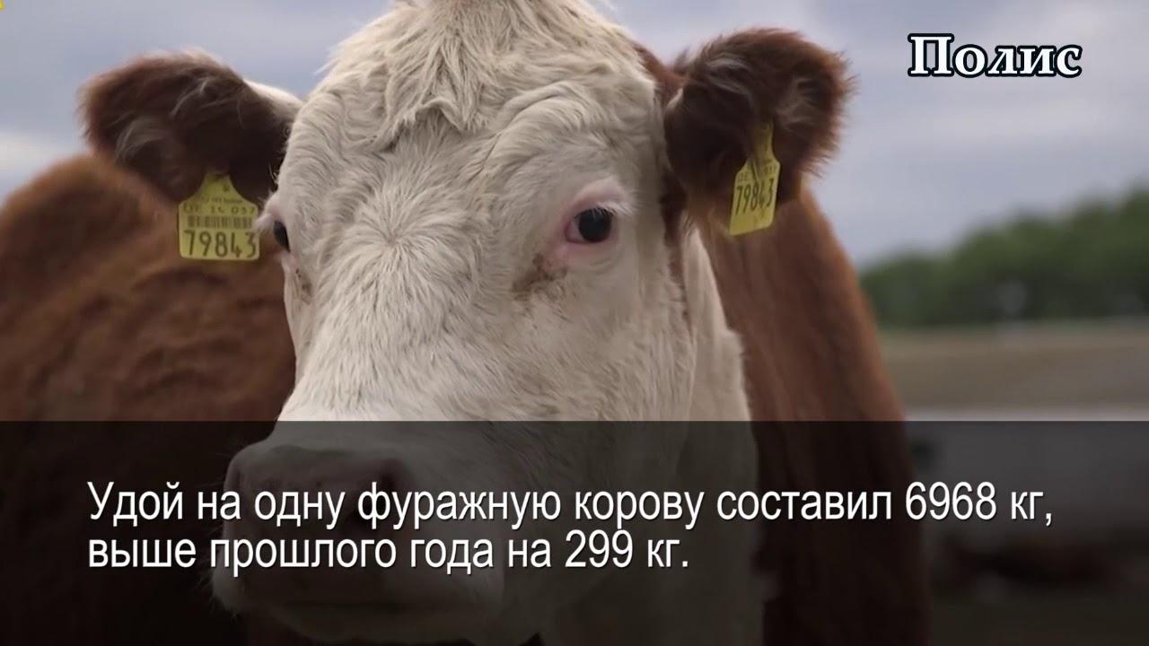 Соколовское сельское поселение
